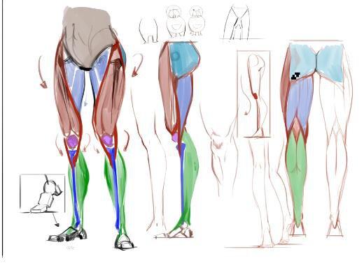 人体结构肌肉绘画技巧