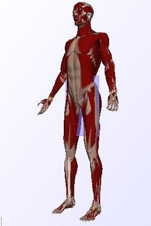 3dmax人体素材