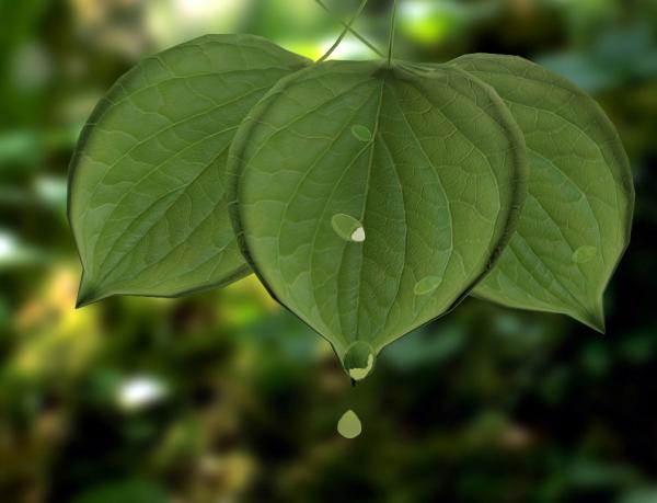 叶子的折法图解步骤图树叶