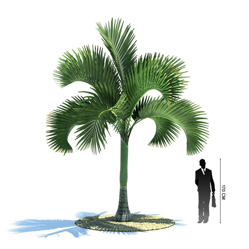 树 棕榈树 800_800