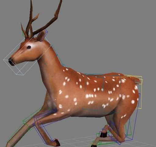 鹿动画模型-人物模型,游戏模型