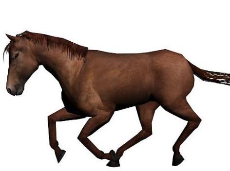 发一个自己做的马的动画 奔跑 走路