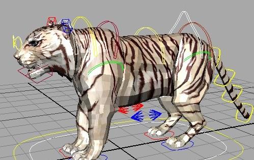 老虎绑定,四足-人物模型,游戏模型, 动物插件, 模型尽