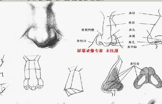 maya鼻子结构建模-01