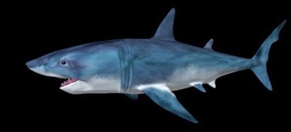 鲨鱼橡皮泥手工制作