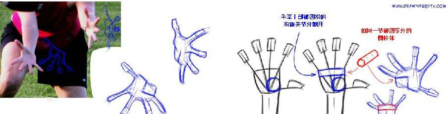 绘画小技巧:手部绘画入门图片
