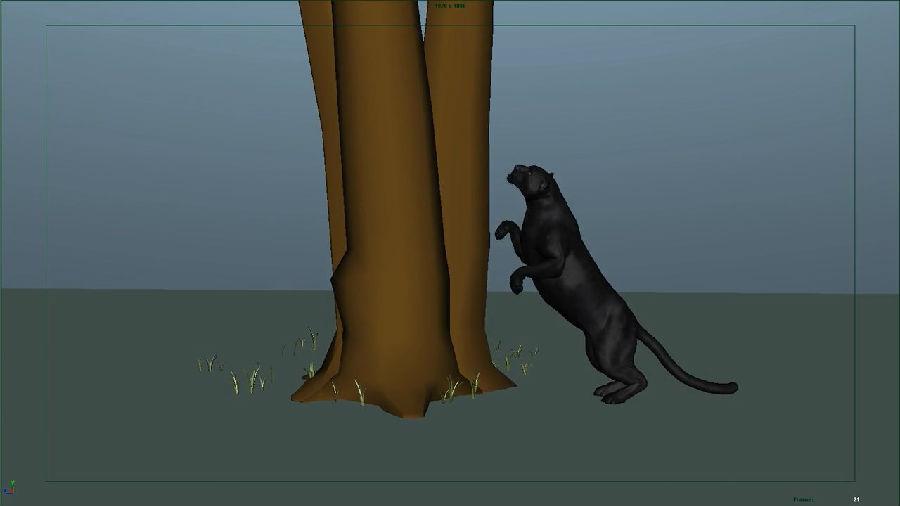 老虎,豹,等四足生物跑 第1节 四足生物参考视频分析  第2节 四足动物
