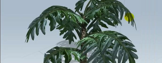 SpeedTree芭蕉类树制作