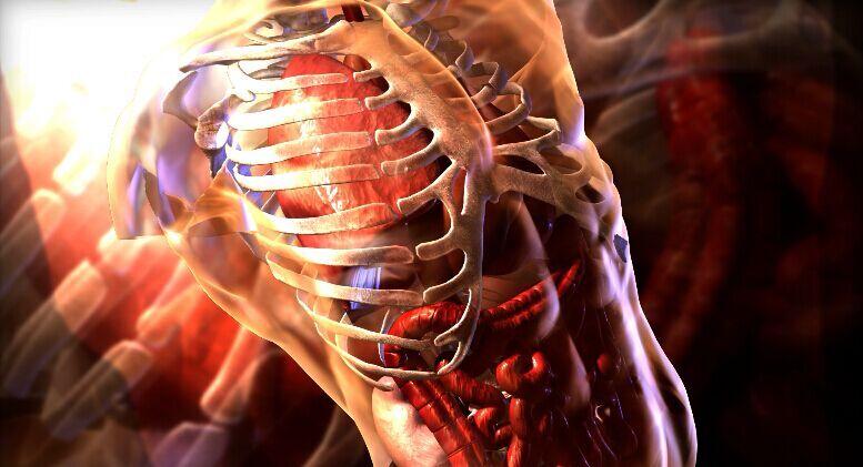 人体构造固)�_谢谢了,马上给出最佳答案,本人不是什么学医的,只是对人体内部构造感