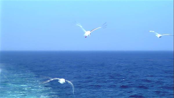蓝蓝天空大海中自由飞翔海鸥陆地休息秀丽景色高清视频拍摄