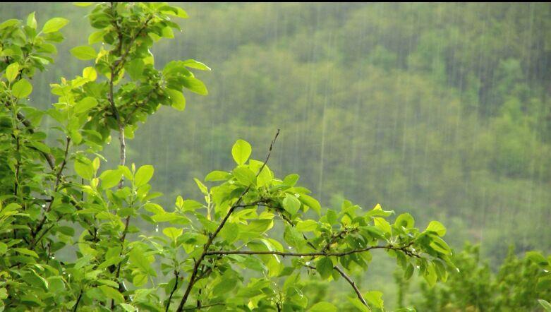 下雨 树叶特写高清实拍视频素材