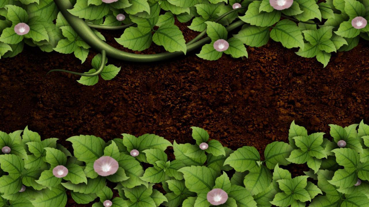 喇叭花叶子生长高清背景视频素材