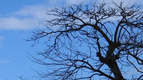 xparticles制作树木生长动画