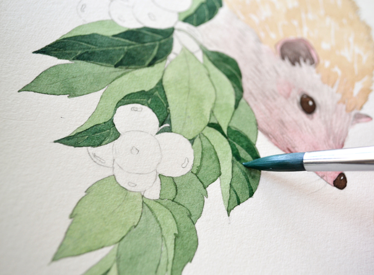 转载:【小刺猬与红果子】水彩绘画过程