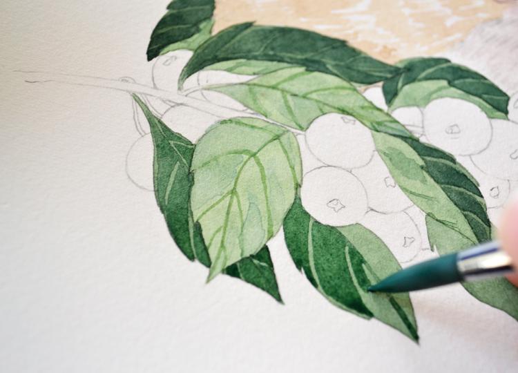 果子】水彩绘画过程